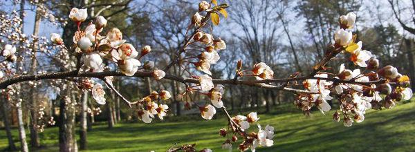 Prolećni cvat